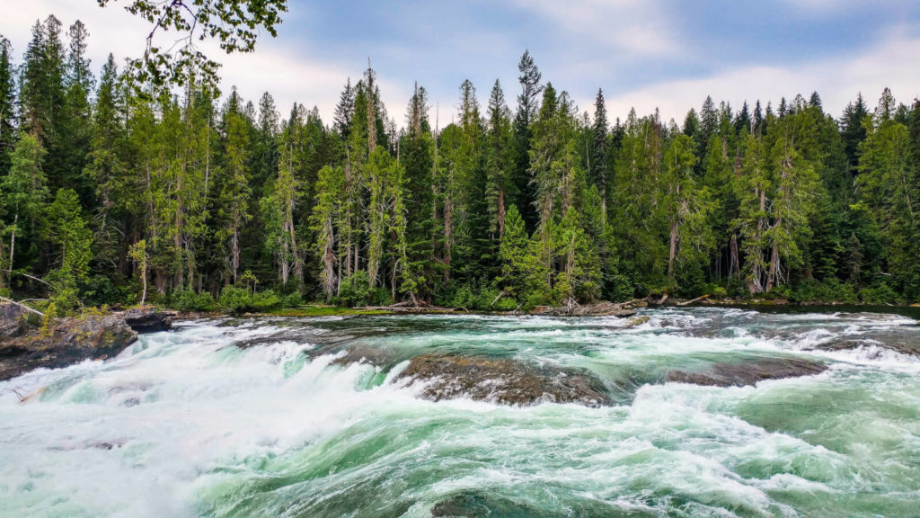 A mountain stream pictured in front of an evergreen forest.