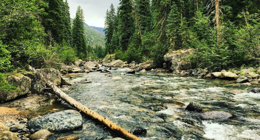 Creek pictured in front of a deciduous forest.